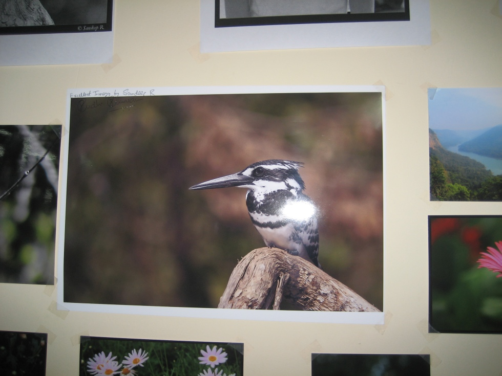 pied kingfisher with sudhir shivram's autograph
