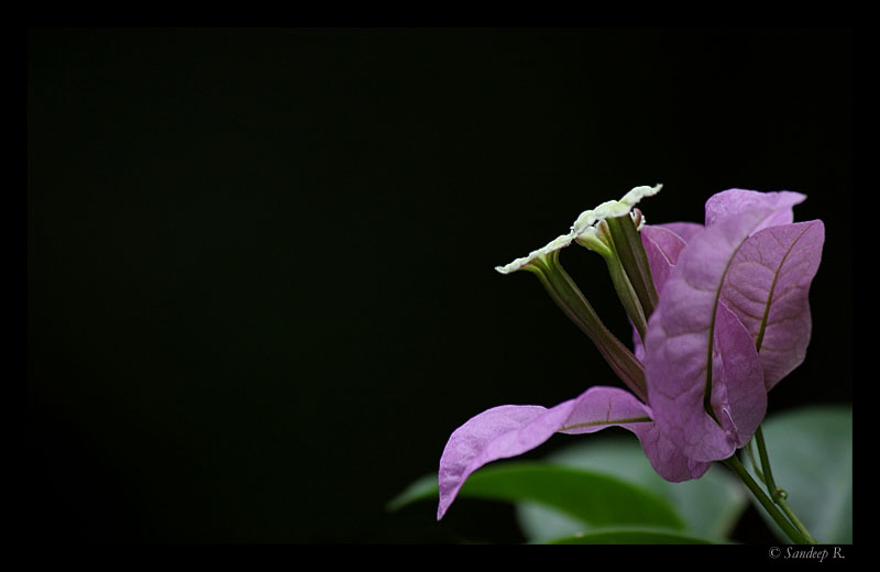 leaf and flower