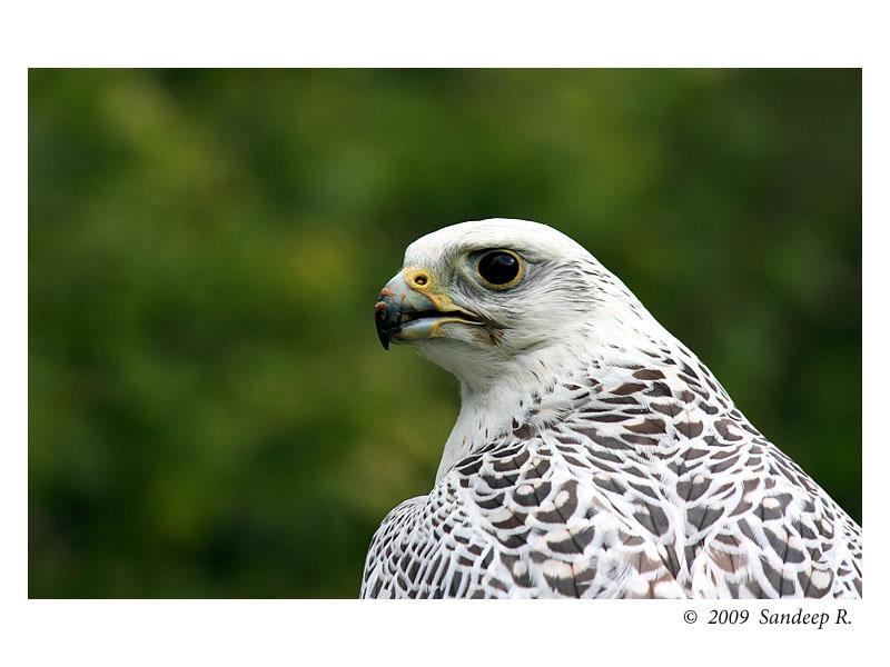 Falconcrest – Birds of Prey | i Thought, i Think i'd Blog ...