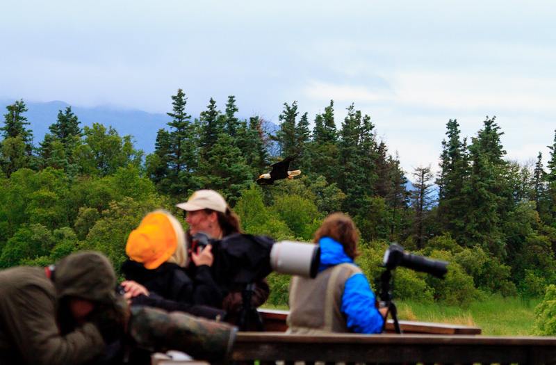 Bald-Eagle-and-Photographers-Alaska-6909